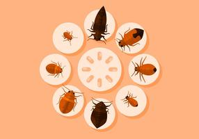 Bed Bugs Vector Illustration