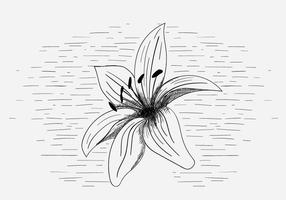Gratis Vector Lily Flower Illustratie