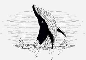 Free vector whale illustration