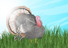 Wild Turkey Look For Something To Eat vector