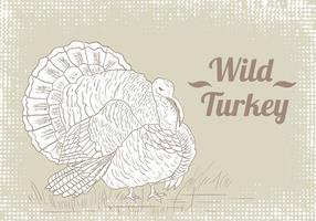 Wild Turkey Ritning Vector