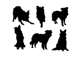 Border collie vector
