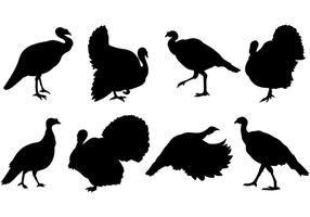 Wild Turkey Icons Vector