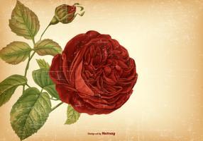 Vintage Rose Hintergrund