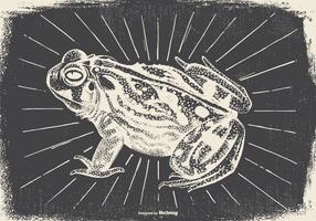 Vintage Frog Illustration