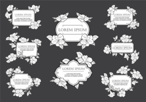 Flores del vector del marco de la petunia