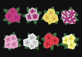 Vettore di fiori di petunia