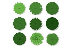 Plantas de topo Visualização de vetores