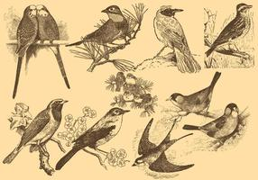 Pose NightingaleLittle oiseaux Dessins