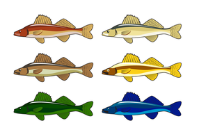 Vector livre Walleye