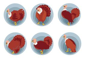Wild turkey pose vector illustration