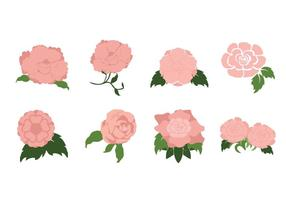 Romantic Camellia Flower Vector