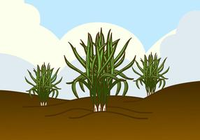 Wilde Zitronengras Pflanze Vektor