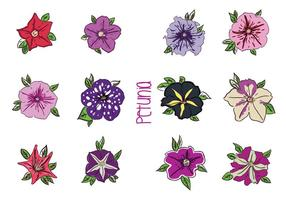 Various Petunia Flower Vectors