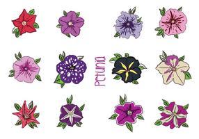 Vari vettori di fiori di petunia