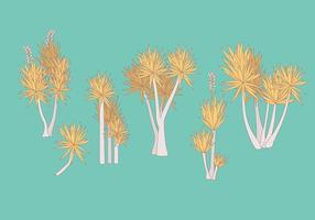 Yucca Växt Vektorer