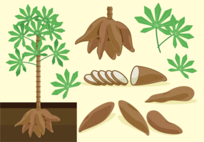 Cassava Free Vektorer