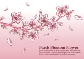 Peach Blossom Vektor-Illustration