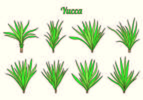 Inställda Yucca vektorer
