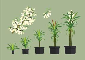 Fri Yucca Växt vektorer