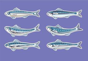 Vector Illustration for Artwork Sardine or European Pilchard