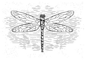 Illustration Dragonfly vecteur libre