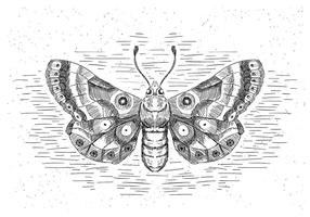 Free Hand Drawn Vector papillon