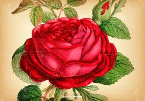 Mooie Vintage Rose Achtergrond