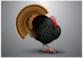 Gratis Wild Turkey Vector