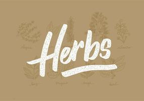 Fresh Herbs Line Drawings