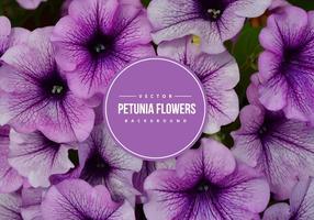 Petunia Vektor Hintergrund