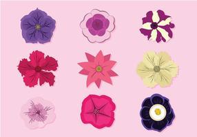 Petunia Gratis Vector