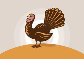Wild turkey illustrations vector