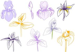 Libre Iris Flores Vectores