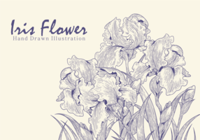 Vecteurs main libre Drawn Iris fleurs