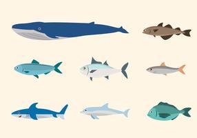 Vectores de peces planos