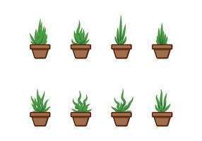 Vectors mandioca plantadas