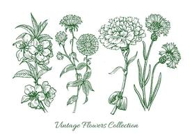 Collection Vintage Flower