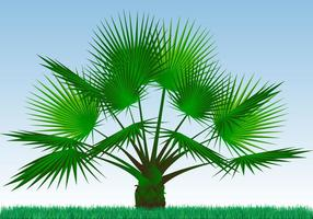 Single Palmetto växt Vector