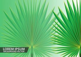 Palm Blätter Hintergrund Vektor