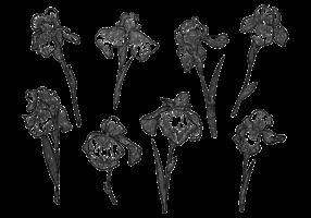 Freie Hand gezeichnete Iris-Blumen-Vektoren