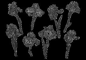 Fria händer som dras Iris Flower vektorer
