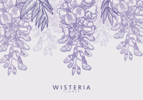 Free Hand Drawn Wisteria Flower Vectors