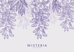 Free Hand Drawn Wisteria Flor de Vectores