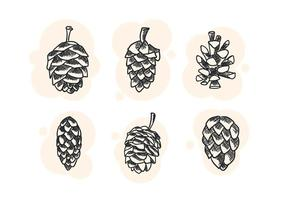 Free Unique Pine Cones Vectors