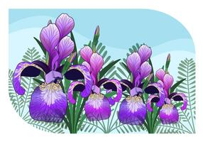 Iris Flower Vector Illustration