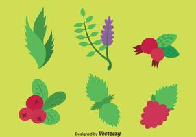 Herbes médicinales vecteurs plantes