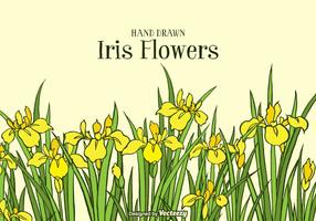 Hand Drawn Yellow Iris Flowers Background