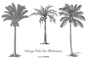 Vintage Palm Tree Illustrationer