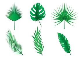 Folhas de palmeira vetores